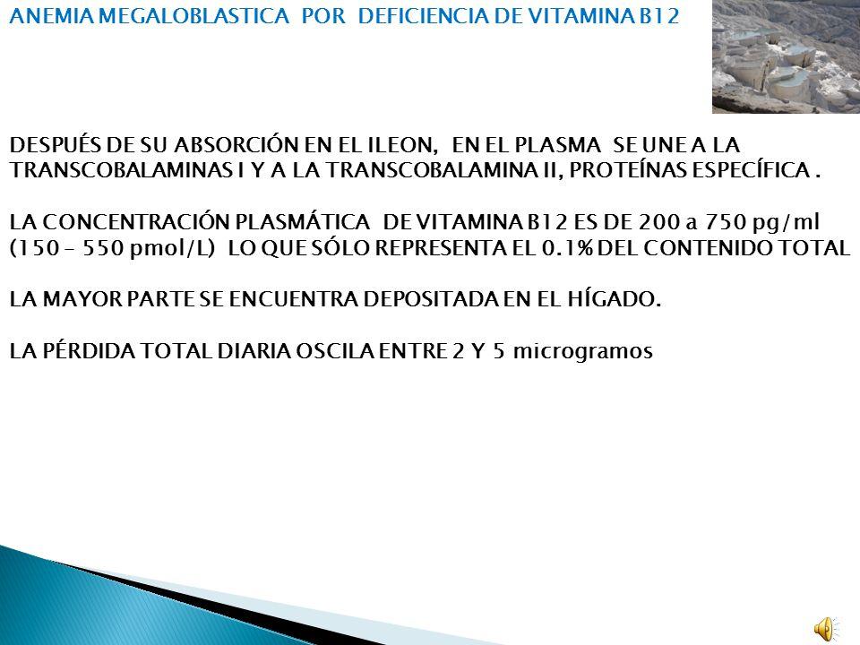 ANEMIA MEGALOBLÁSTICA.DEFICIENCIA DE VITAMINA B 12.