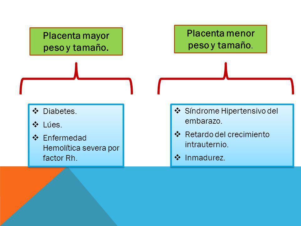 Diabetes. Lúes. Enfermedad Hemolítica severa por factor Rh. Diabetes. Lúes. Enfermedad Hemolítica severa por factor Rh. Placenta mayor peso y tamaño.