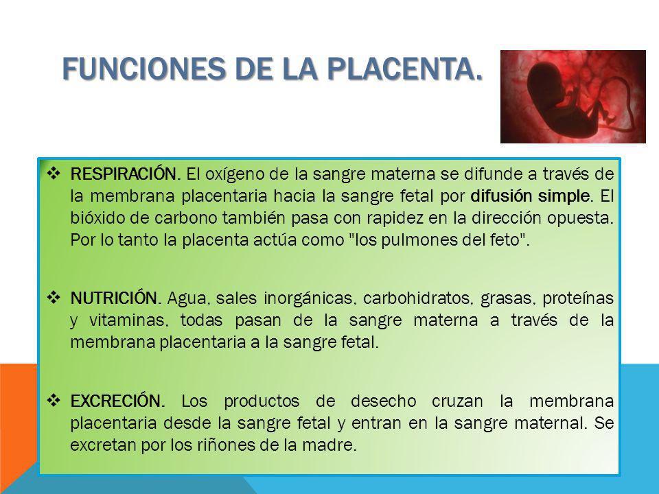 RESPIRACIÓN. El oxígeno de la sangre materna se difunde a través de la membrana placentaria hacia la sangre fetal por difusión simple. El bióxido de c