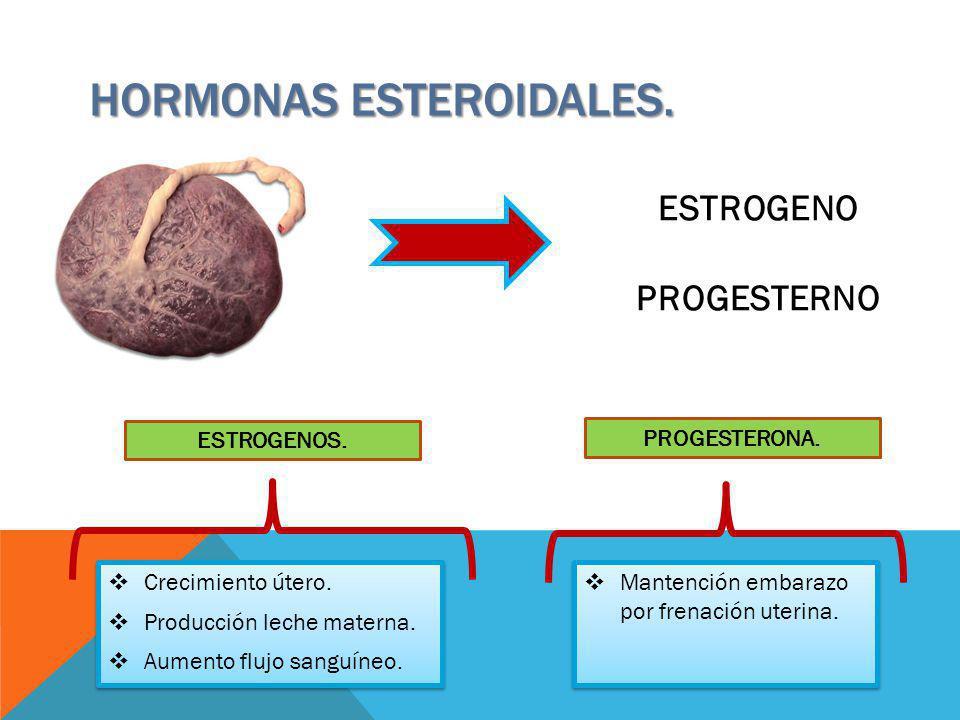 HORMONAS ESTEROIDALES. ESTROGENO PROGESTERNO Crecimiento útero. Producción leche materna. Aumento flujo sanguíneo. Crecimiento útero. Producción leche