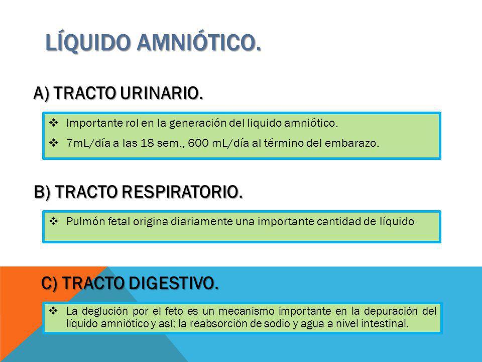 Importante rol en la generación del liquido amniótico. 7mL/día a las 18 sem., 600 mL/día al término del embarazo. LÍQUIDO AMNIÓTICO. A) TRACTO URINARI