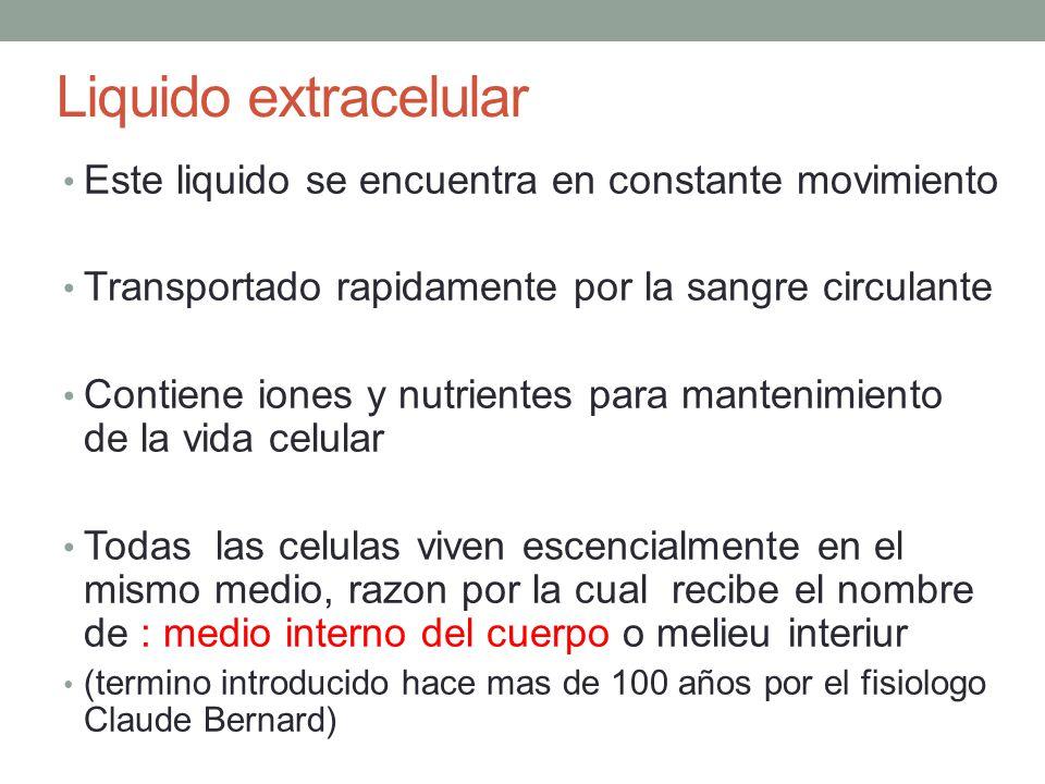 Liquido Extracelular Origen de los nutrientes Sistema Respiratorio: El O2 Tracto Gastrointestinal: Hidratos de Carbono, ácidos grasos y aminoácidos Hígado: Órgano que se encarga de la conversión de algunas sustancias hacia formas manejables.