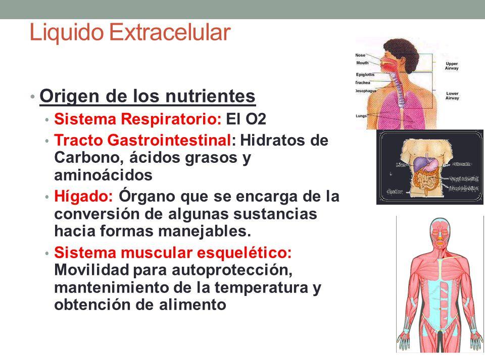 Liquido Extracelular Eliminación de los productos finales del metabolismo: Pulmones: Elimina CO2 Riñones: Elimina úrea, ácido úrico, excesos de iones y agua