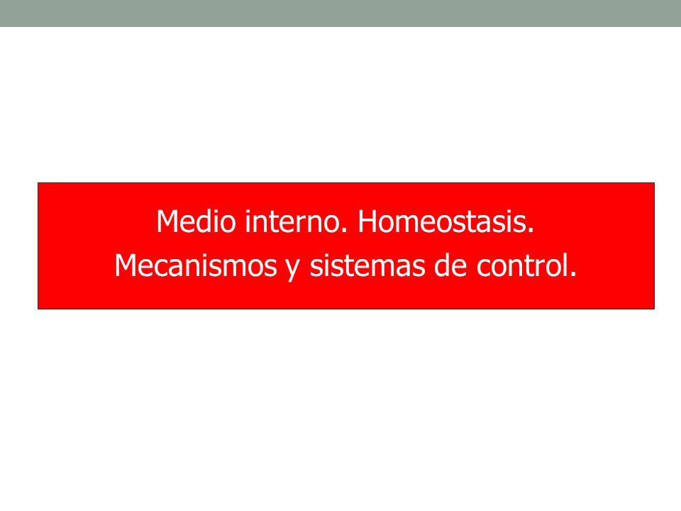 MEDIO INTERNO (C.
