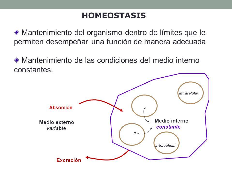 HOMEOSTASIS: C aracterísticas El medio interno (LEC) se mantiene en condiciones constantes: las concentraciones de O 2 y CO 2, nutrientes (glucosa, AAs,..), desechos orgánicos (urea, urato...), e iones (Na +, K +,...), así como Tª, pH, V y P deben permanecer relativamente inalterados en los líquidos corporales Existe un estado estable fisiológico: equilibrio entre las demandas del organismo y la respuesta hacia dichas demandas.