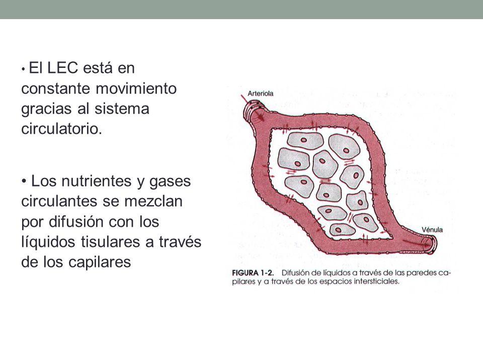 Regulación de la homeostasis.S.