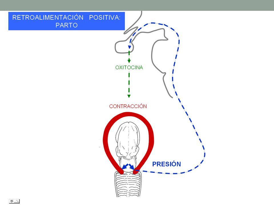 Enfermedad Definición: Es la pérdida del equilibrio o la capacidad del organismo para conservar sus funciones.