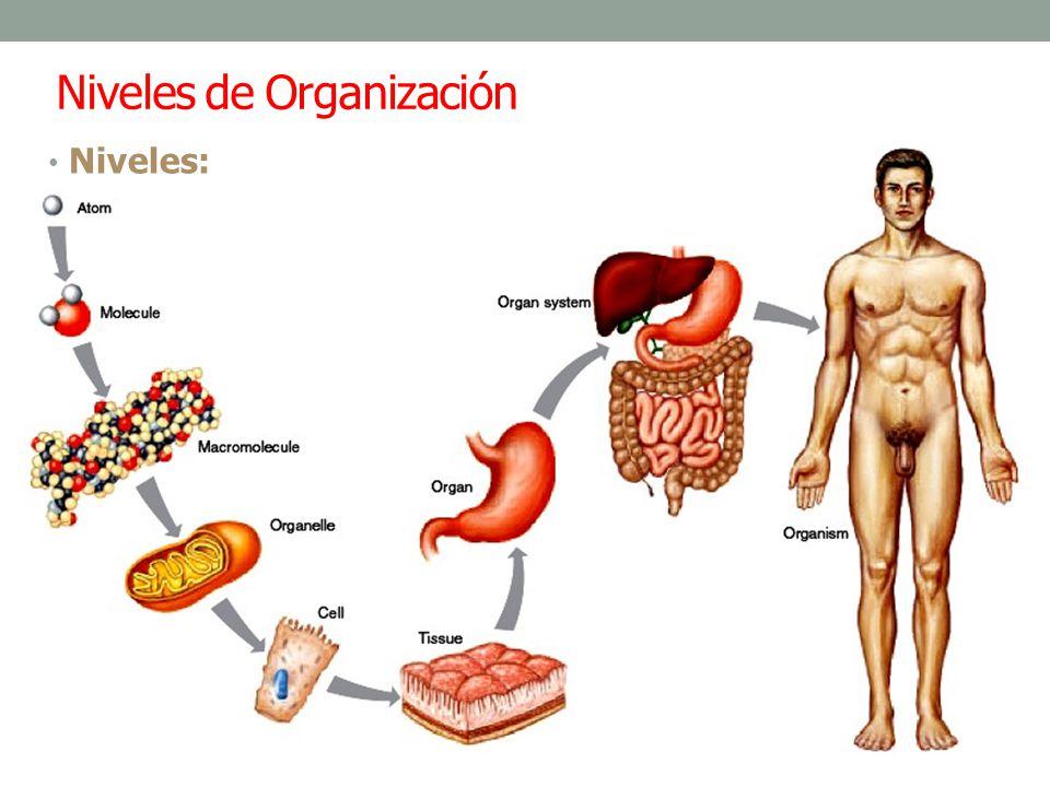 –Químico: Atomos (C, H, O, N, Ca, K, Na) y moléculas (proteínas, carbohidratos, grasas y vitaminas) esenciales para mantenimiento de la vida.