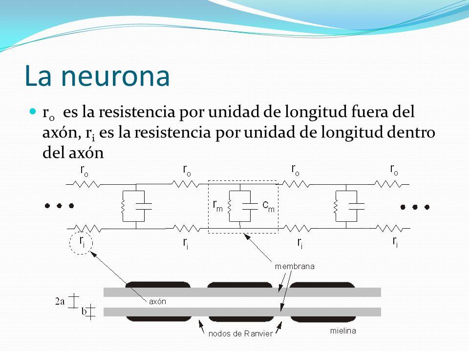 La neurona r 0 es la resistencia por unidad de longitud fuera del axón, r i es la resistencia por unidad de longitud dentro del axón