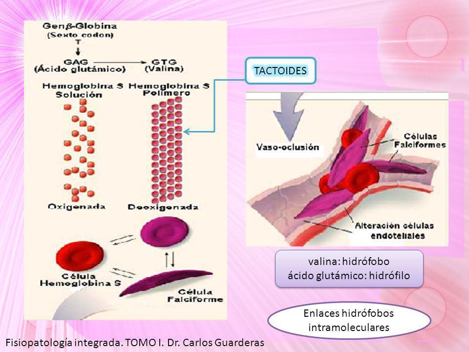valina: hidrófobo ácido glutámico: hidrófilo valina: hidrófobo ácido glutámico: hidrófilo Enlaces hidrófobos intramoleculares Fisiopatología integrada.