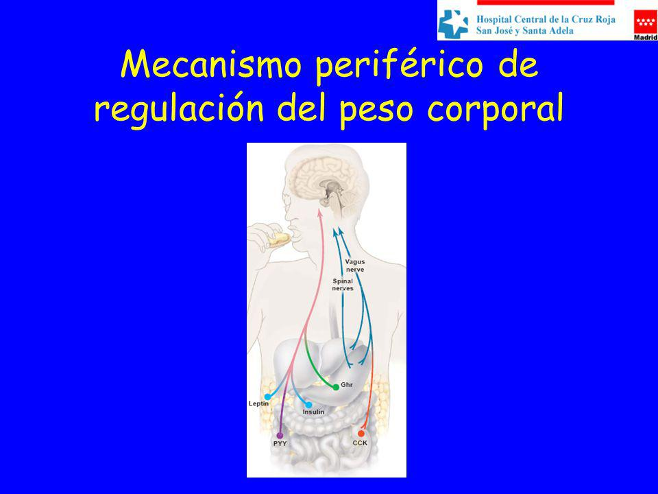 Mecanismo periférico de regulación del peso corporal