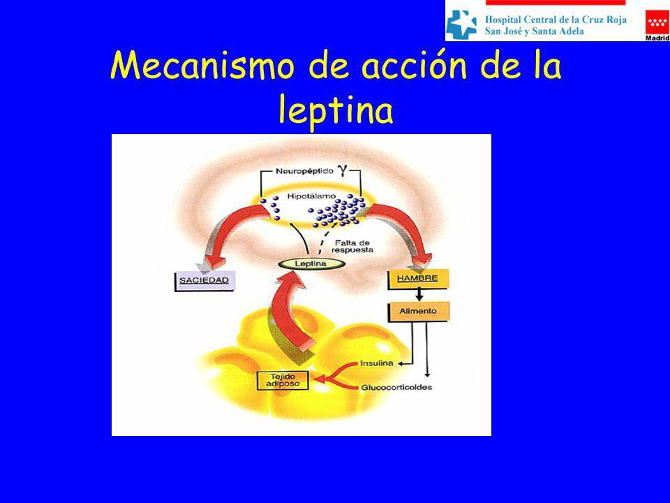 Mecanismo de acción de la leptina