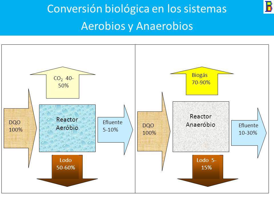 Fundamentos de los procesos biológicos