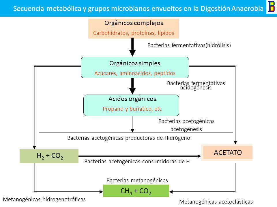 Digestión Anaerobia Materia orgánicaBacterias Anaerobias CH 4 CO 2 H 2 O H 2 S NH 3 NUEVAS CELULAS Es un proceso que se realiza en ausencia de oxígeno