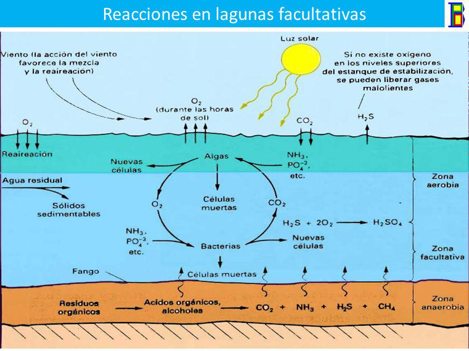 Lagunas facultativas Son aquellas donde la estabilización de las aguas residuales se lleva a cabo mediante una combinación de bacterias aerobias, facu