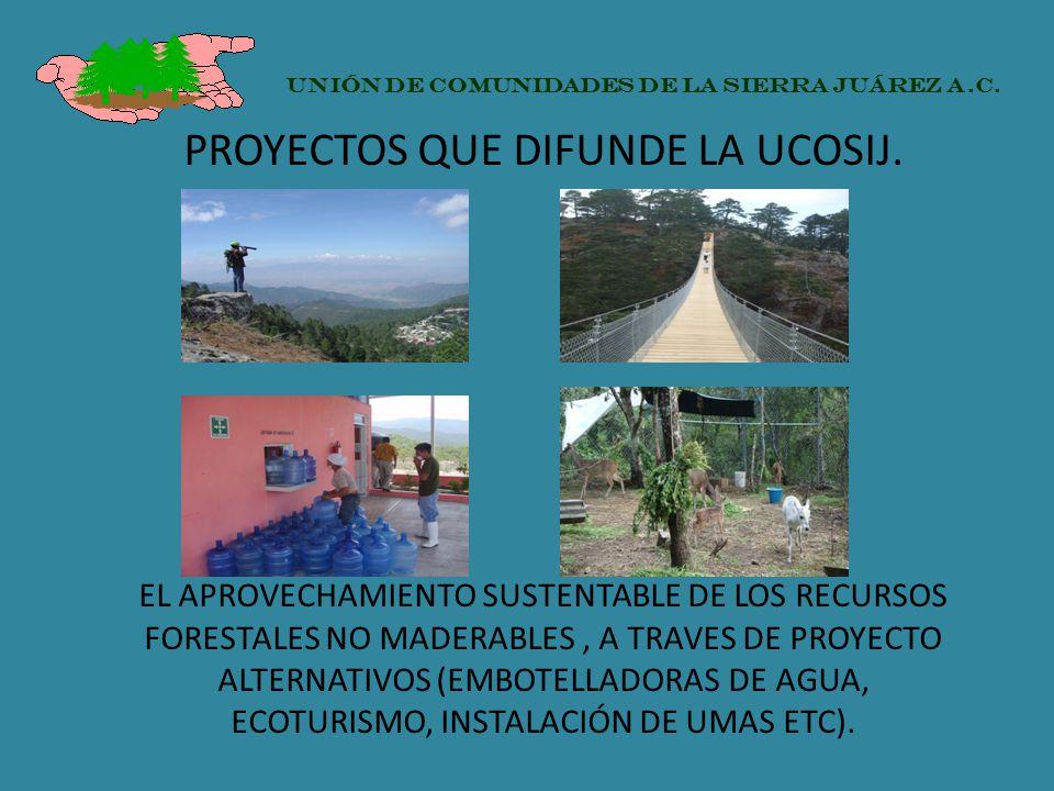 PROYECTOS QUE DIFUNDE LA UCOSIJ. EL APROVECHAMIENTO SUSTENTABLE DE LOS RECURSOS FORESTALES NO MADERABLES, A TRAVES DE PROYECTO ALTERNATIVOS (EMBOTELLA