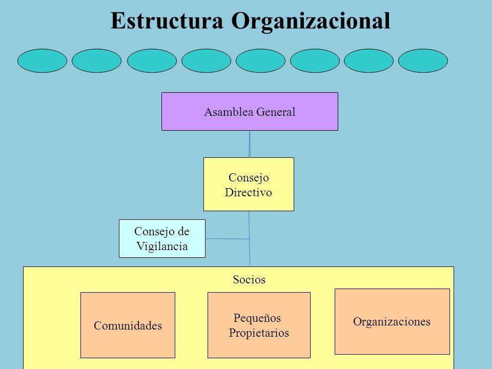 Asamblea General Consejo Directivo Consejo de Vigilancia Comunidades Pequeños Propietarios Organizaciones Socios Estructura Organizacional