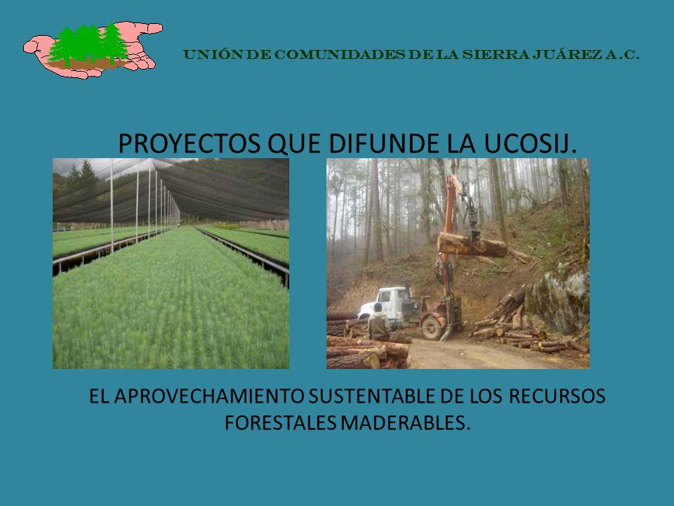 PROYECTOS QUE DIFUNDE LA UCOSIJ. EL APROVECHAMIENTO SUSTENTABLE DE LOS RECURSOS FORESTALES MADERABLES. UNIÓN DE COMUNIDADES DE LA SIERRA JUÁREZ A.C.