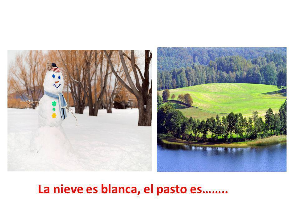 La nieve es blanca, el pasto es……..