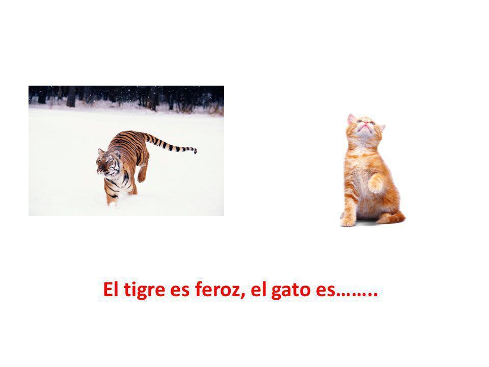 El tigre es feroz, el gato es……..
