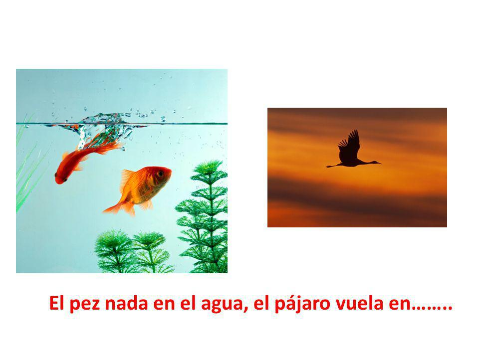 El pez nada en el agua, el pájaro vuela en……..