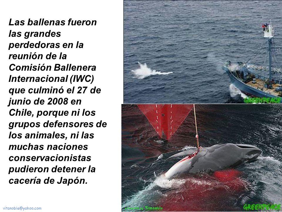 La pesca de los distintos tipos de cetáceos ha constituido desde tiempos primitivos una parte importante de la economía de muchos paises como Noruega,