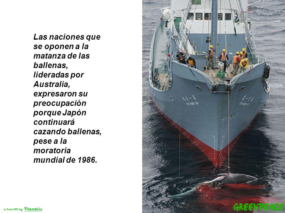 Las ballenas fueron las grandes perdedoras en la reunión de la Comisión Ballenera Internacional (IWC) que culminó el 27 de junio de 2008 en Chile, por