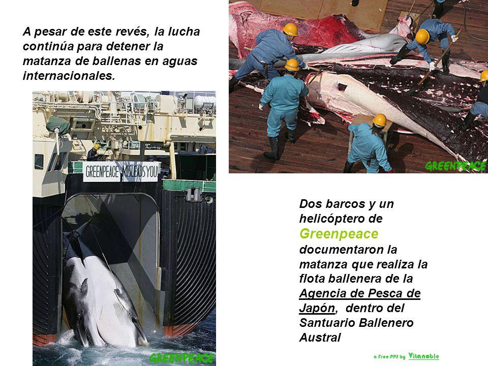 Las naciones que se oponen a la matanza de las ballenas, lideradas por Australia, expresaron su preocupación porque Japón continuará cazando ballenas,