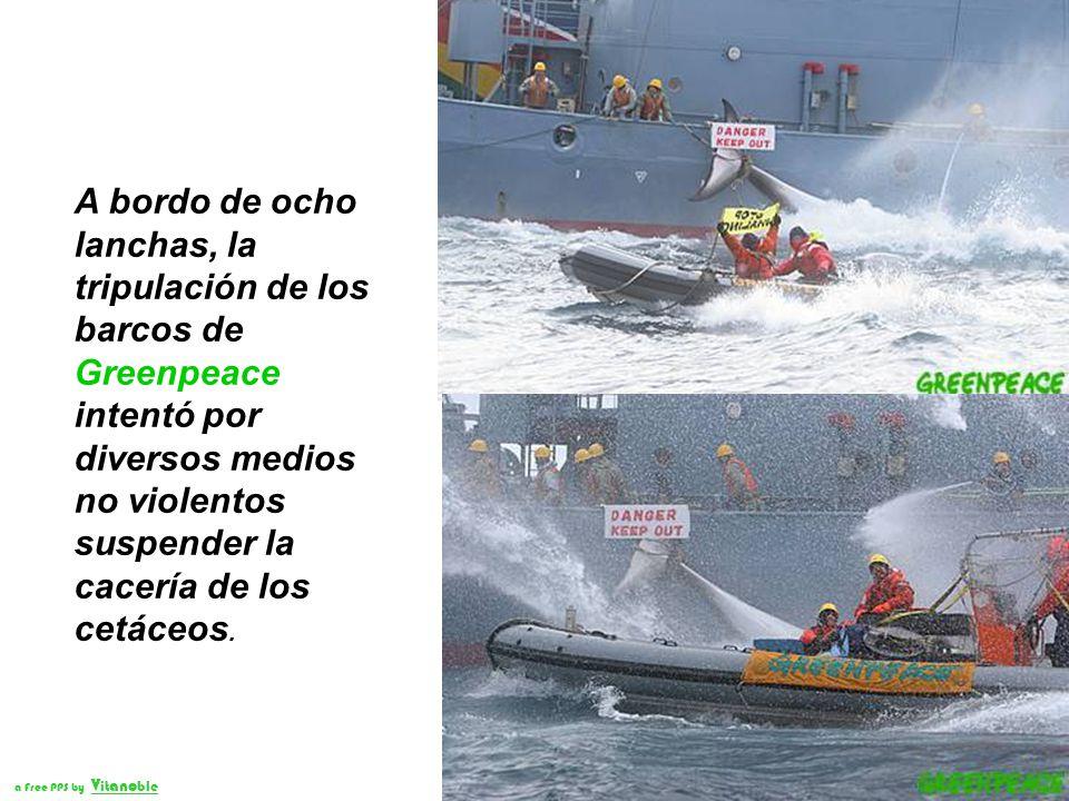 Dos barcos y un helicóptero de Greenpeace documentaron la matanza que realiza la flota ballenera de la Agencia de Pesca de Japón, dentro del Santuario