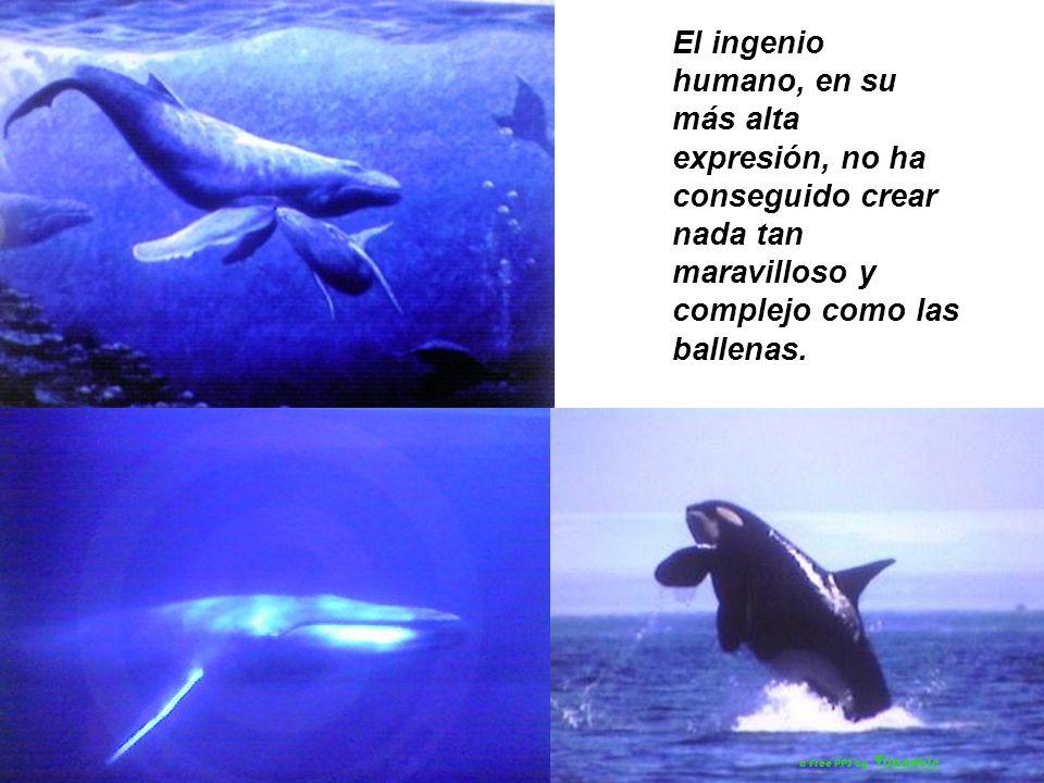 La compasión por la Naturaleza que generan las ballenas en la gente y el respeto que inspiran, es un arma que puede ser usada en la lucha para asegura