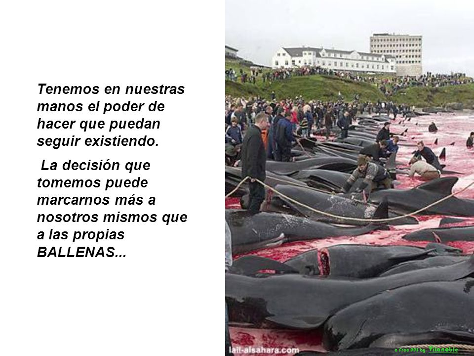 El ingenio humano, en su más alta expresión, no ha conseguido crear nada tan maravilloso y complejo como las ballenas. vitanoble@yahoo.com a Free PPS