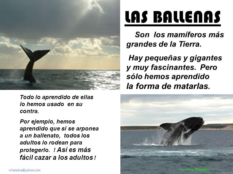 Con Sonido Un aporte educativo de: vitanoble@yahoo.com DEFENDAMOS A LAS BALLENAS En el mes de la Protección de los Océanos a Free PPS by V it ano ble