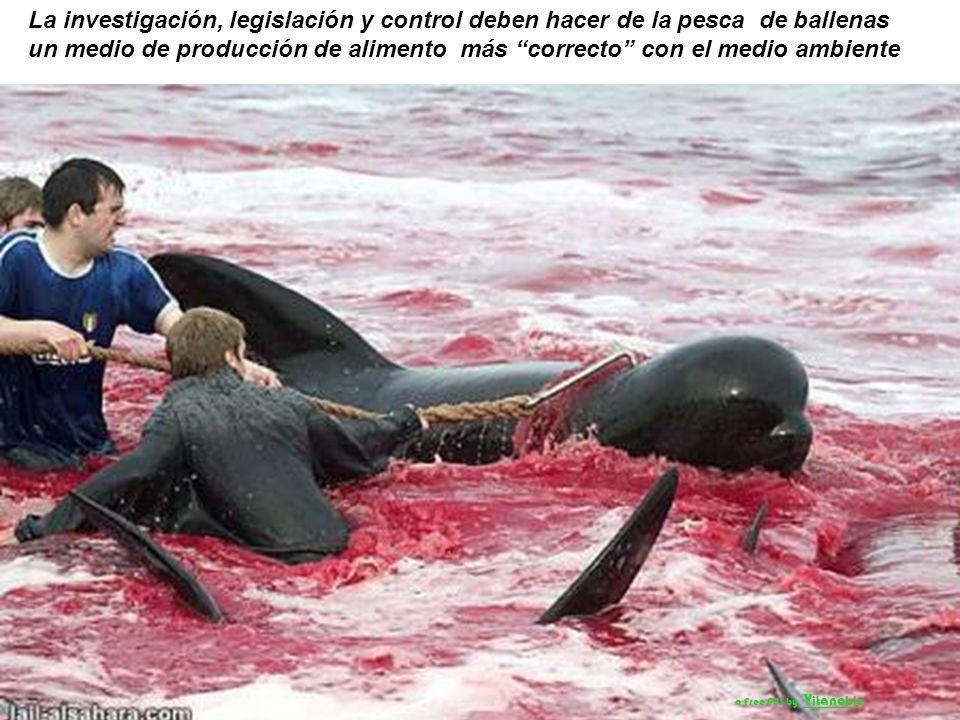 La Comisión Ballenera Internacional (IWC) ha centrado su atención en mejorar los métodos de caza de las ballenas. a Free PPS by V it ano ble