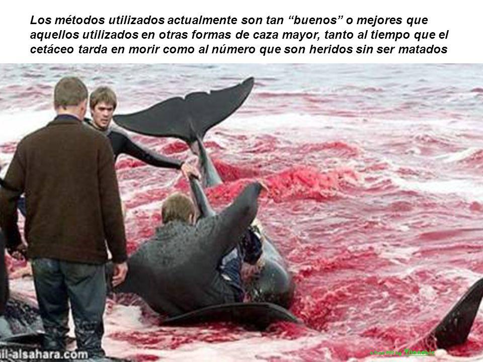 La investigación, legislación y control deben hacer de la pesca de ballenas un medio de producción de alimento más correcto con el medio ambiente a Fr