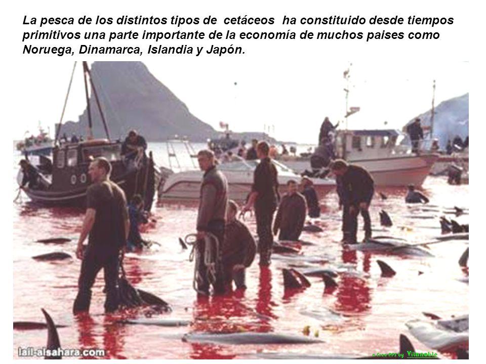 A la sangrienta pesca costera, hay que sumar la pesca en alta mar, utilizando barcos enormes equipados con radar, sonar y explosivos arpones granadas.
