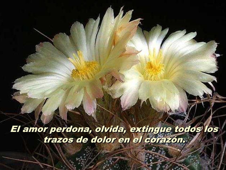 El amor no alimenta heridas con pensamientos dolorosos, no cultiva ofensas con lástimas y autocompasión. El amor no alimenta heridas con pensamientos
