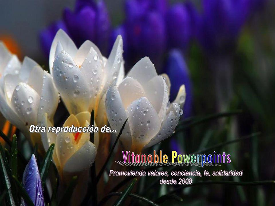 www.vitanoblepowerpoints.net María, mujer de la decisión, ilumina nuestra mente y nuestro corazón, para que sepamos obedecer a la Palabra de tu Hijo J