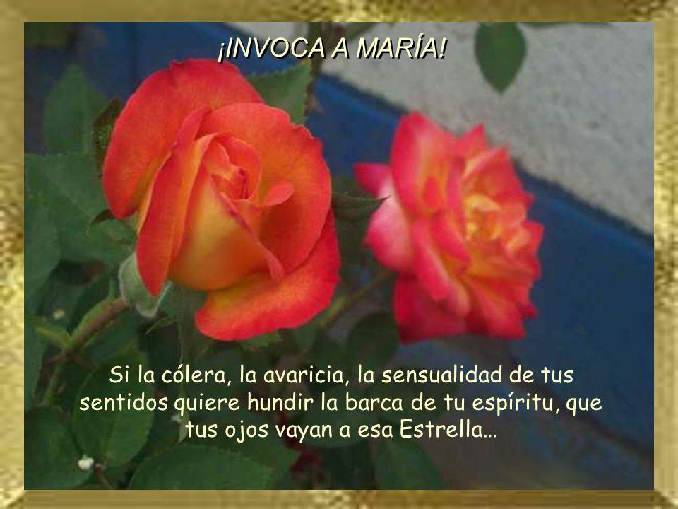 ROSA 11 Si la cólera, la avaricia, la sensualidad de tus sentidos quiere hundir la barca de tu espíritu, que tus ojos vayan a esa Estrella… ¡INVOCA A MARÍA!