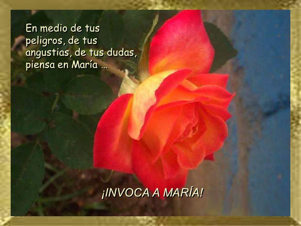 ROSA 2 En medio de tus peligros, de tus angustias, de tus dudas, piensa en María … ¡INVOCA A MARÍA!