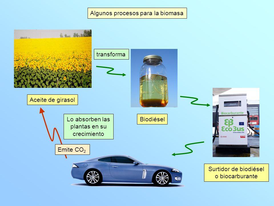 Residuos procedentes de podas Residuos de industrias madereras Residuos de cosechas Residuos de limpiezas forestales Pellets (residuos triturados y prensados) calefacción Se fabrica Algunos procesos para la biomasa