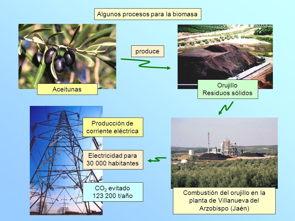 Algunos procesos para la biomasa Aguas residuales Estiércol Basuras orgánicas Fermentación (acción de bacterias) Metano transformado en etileno Industria petroquímica