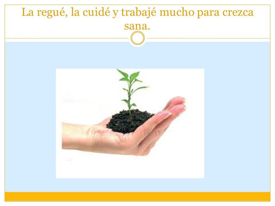 o podemos comenzar a plantar de nuevo, con más experiencia y con más cuidados.