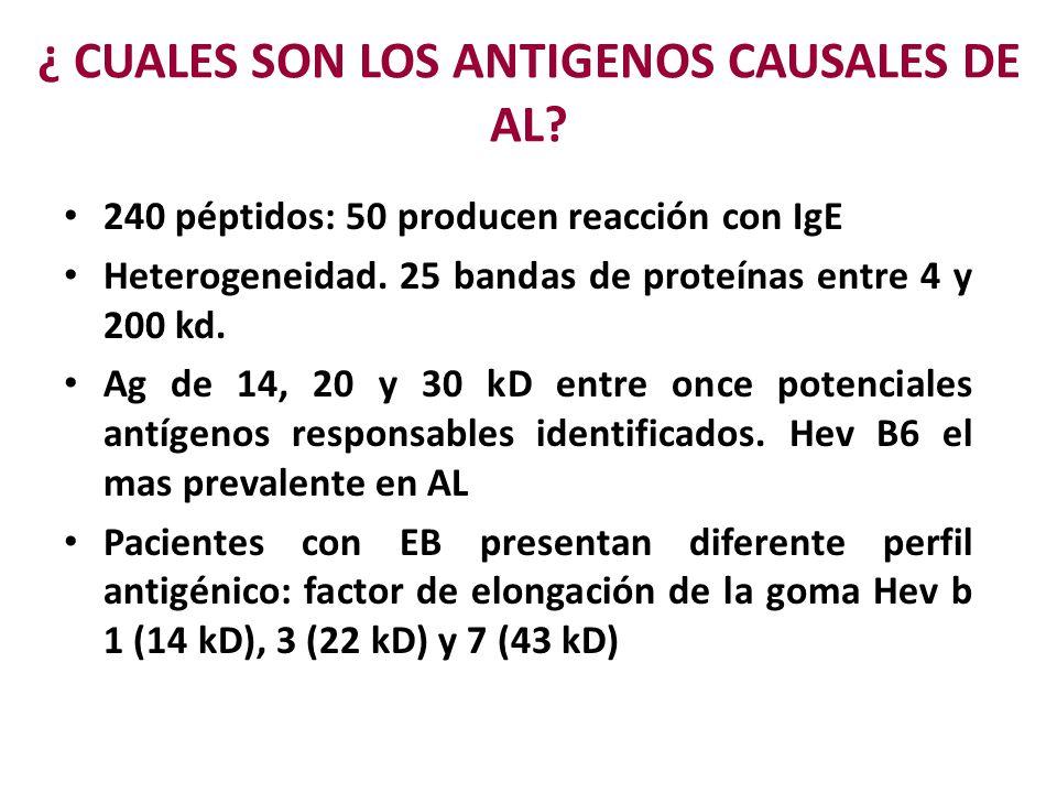 ¿ CUALES SON LOS ANTIGENOS CAUSALES DE AL? 240 péptidos: 50 producen reacción con IgE Heterogeneidad. 25 bandas de proteínas entre 4 y 200 kd. Ag de 1