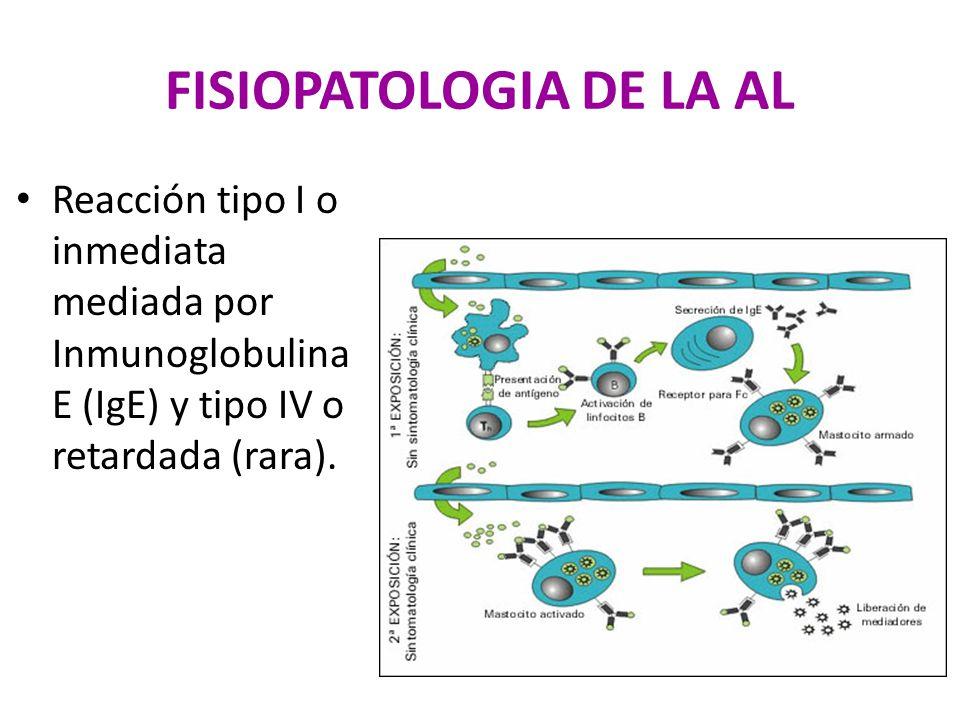 FISIOPATOLOGIA DE LA AL Reacción tipo I o inmediata mediada por Inmunoglobulina E (IgE) y tipo IV o retardada (rara).