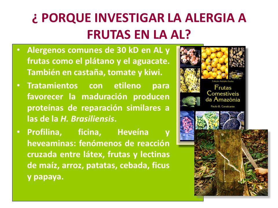 ¿ PORQUE INVESTIGAR LA ALERGIA A FRUTAS EN LA AL? Alergenos comunes de 30 kD en AL y frutas como el plátano y el aguacate. También en castaña, tomate
