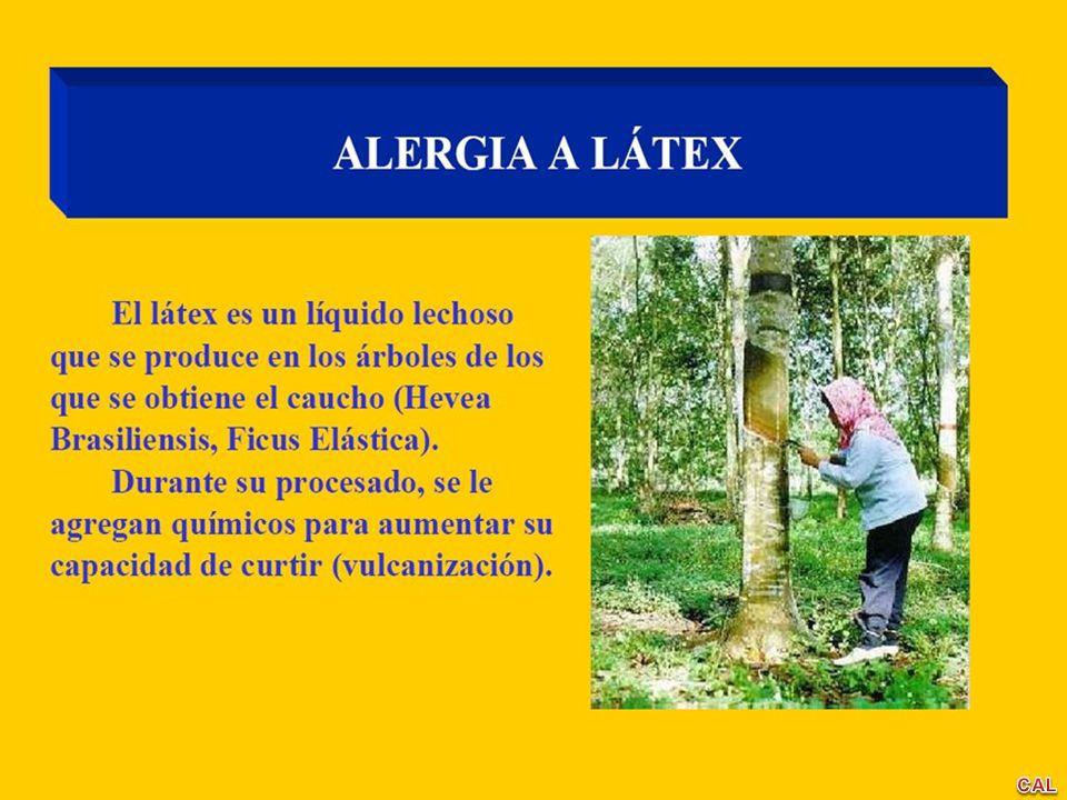 ¿ PORQUE AUMENTA LA ALERGIA AL LÁTEX (AL).< 2 % de la población general.