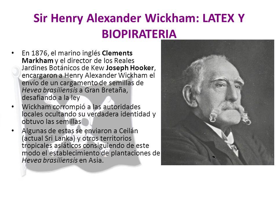 Sir Henry Alexander Wickham: LATEX Y BIOPIRATERIA En 1876, el marino inglés Clements Markham y el director de los Reales Jardines Botánicos de Kew Jos
