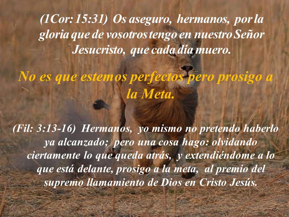 (1Cor: 15:31) Os aseguro, hermanos, por la gloria que de vosotros tengo en nuestro Señor Jesucristo, que cada día muero.