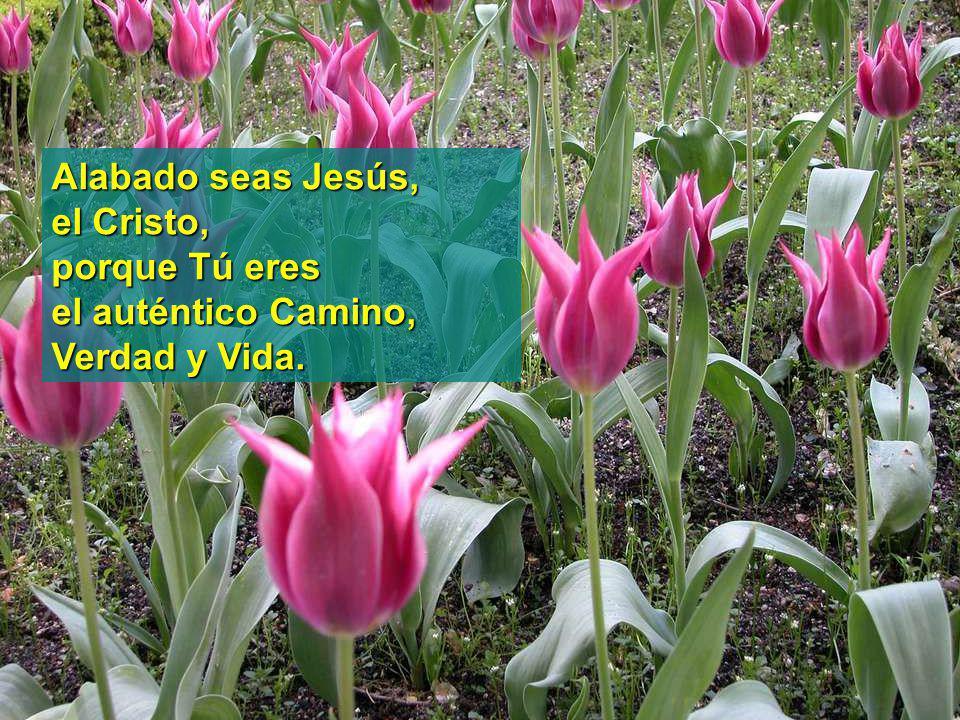 www.vitanoblepowerpoints.net Alabado seas Padre de bondad, por este día que comienza y por el amor que derramas sobre todas tus criaturas.