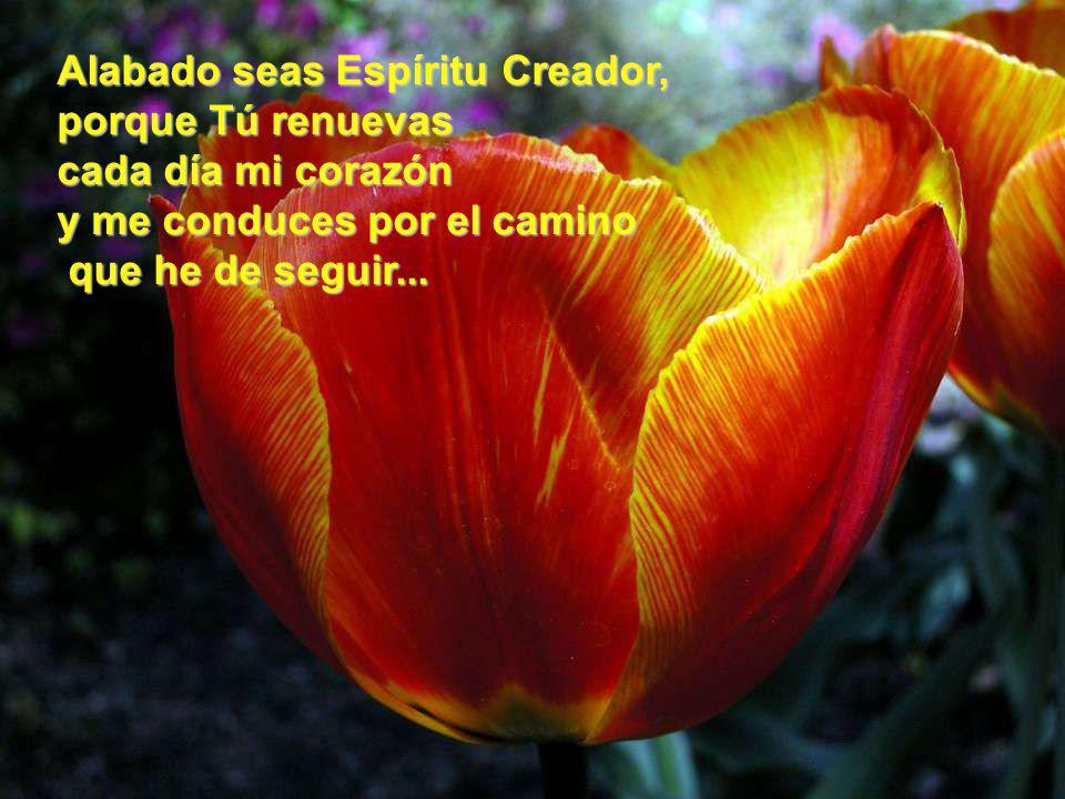 www.vitanoblepowerpoints.net Alabado seas Jesús, el Cristo, porque Tú eres el auténtico Camino, Verdad y Vida.